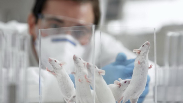 Scientist-watching-mice-in-laboratory.jpg